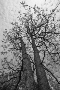 15 Arbres © Diane Hamelin-Bourassa 2016